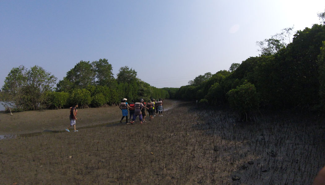 Mangroves Of Malabar Trip